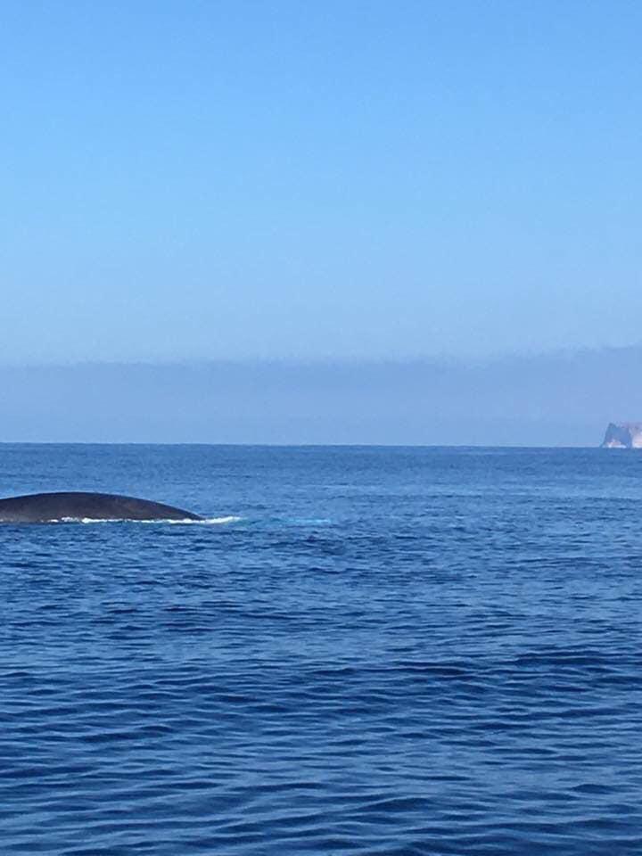 Va in scena lo spettacolo delle balene a Lampedusa - Foto di Pippo Lo Verde